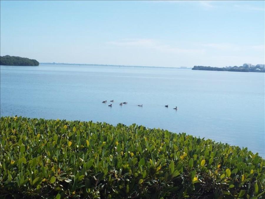 Sarasota Bay view