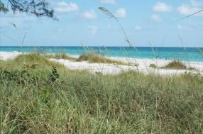 The Shore 113